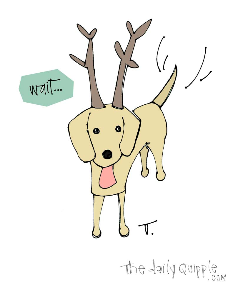 For the Most Wonderful Day of the Year | The Daily Quipple